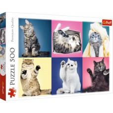 Trefl 500 - Kittens